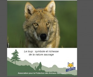 Loup photo ASPAS